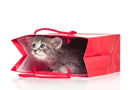 Curious cute kitten in a gift bag isolated on white