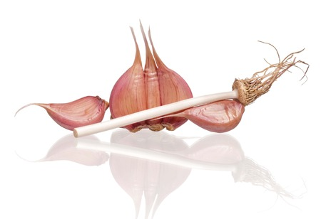 clean artery: Garlic bulb with clipping-path on white background with reflection