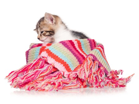 Sleepy little kitten in a warm knitted scarf isolated on white