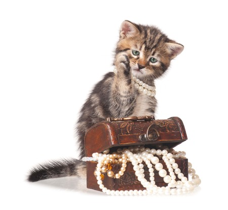 constraining: Cute kitten with jewel box with pearl necklaces isolated on white background