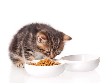 Cute kitten with bowl for a forage over white  Stock Photo