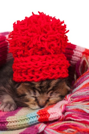neonate: Neonate kitten on a warm knitted scarf over white background
