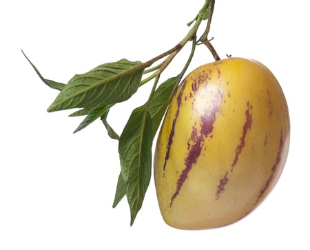 pepino: Whole single Pepino fruit with leaves on white background