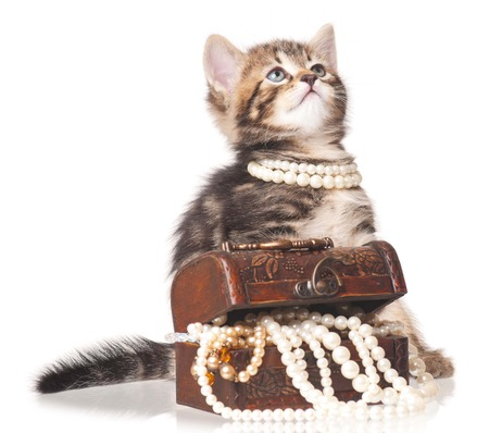 intriguing: Fashionable cute kitten with pearl necklaces isolated over white Stock Photo