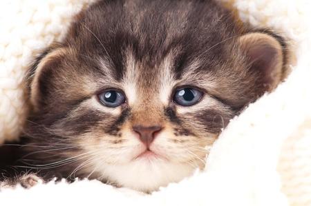 Cute newborn kitten in a warm knitted sweater close-up