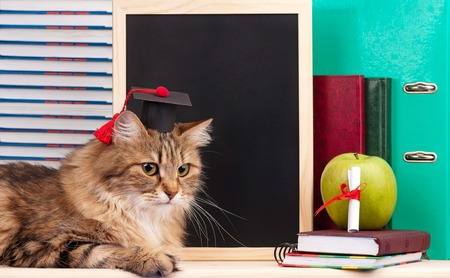 Scientific siberian cat with educational accessories concept photo