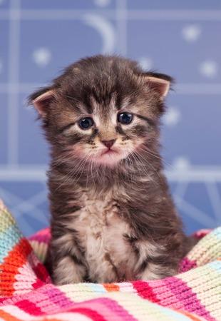 light blue background: Sad cute kitten in a warm knitted scarf over light blue background Stock Photo