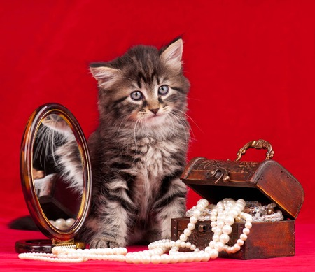 Cute kitten and a chest with pearls near the mirror over red  photo