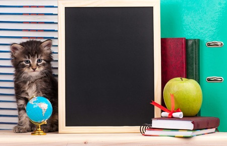 Cute little  kitten with school accessories and black blank board for your text photo