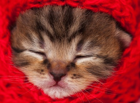 neonate: Portrait of cute neonate kitten in a warm knitted scarf close-up