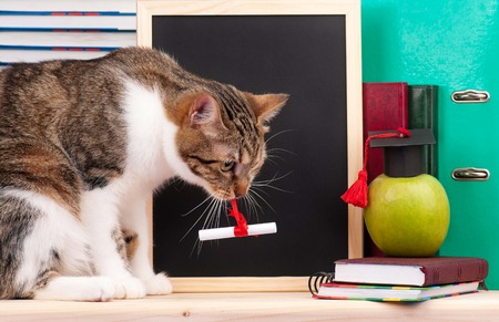 Scientific cat with educational accessories and blank board for your text photo