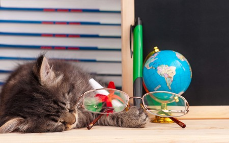 Tired kitten with school accessories waits for vacation photo