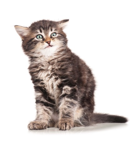 Little kitten with emotion of disgusting  isolated on white background