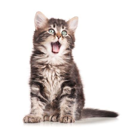 Gapende schattige katje op een witte achtergrond knipsel