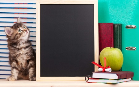 Cute little  kitten with school accessories and black blank board for your text Stock Photo