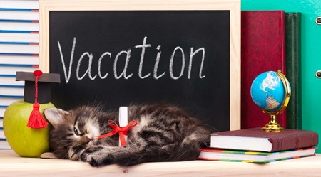Cute little  kitten with school accessories waits for a vacation photo