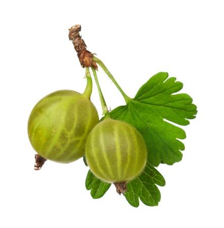 熟した: 白い背景で隔離の葉と緑の熟したグーズベリー