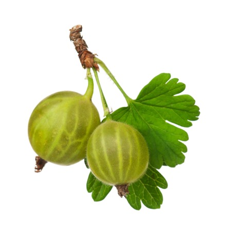 Green ripe gooseberries with leaves isolated on white background Stock Photo