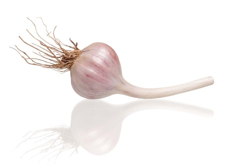 clean artery: Raw garlic bulb with roots isolated on white background cutout