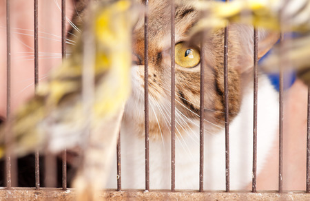 stared: The adult tabby stared at a birdie through cage rods. Focus on the cats eye Stock Photo