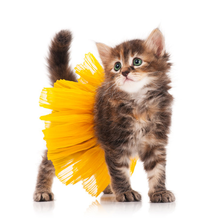 Cute fluffy kitten posing dressed in the tutu over white background photo