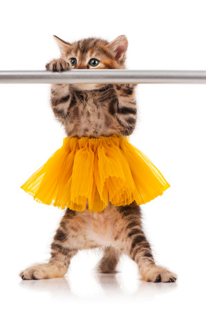 Cute fluffy kitten dressed in the tutu posing near ballet barre over white background