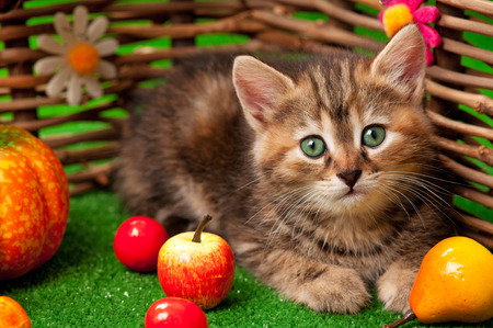 Cute kitten on the bright artificial grass over decorative wattle fence background photo