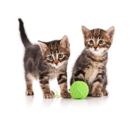 Cute little kittens with ball of green threads on white background