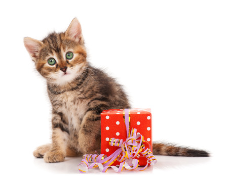 Cute little siberian kitten with gift-box isolated on white background