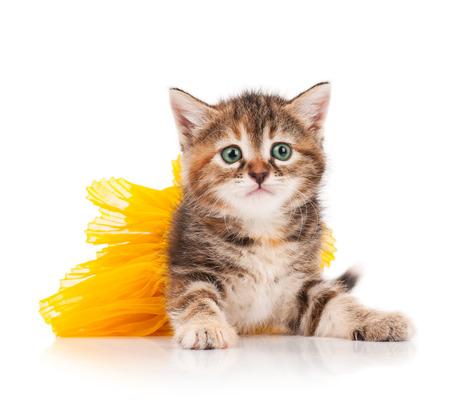 흰색 배경 위에 나머지는 투투에 옷을 입고 귀여운 새끼 고양이 스톡 콘텐츠
