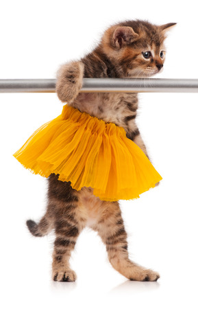 Cute fluffy kitten dressed in the tutu posing near ballet barre over white background