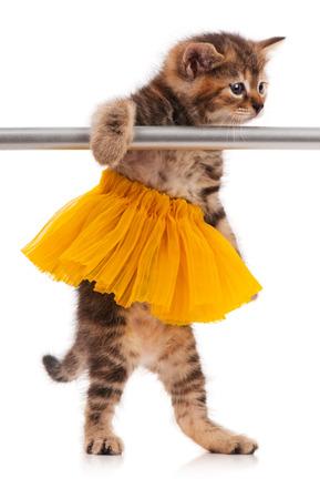 fluffy: Gatito mullido lindo vestido con el tut� posando cerca de barra de ballet sobre fondo blanco