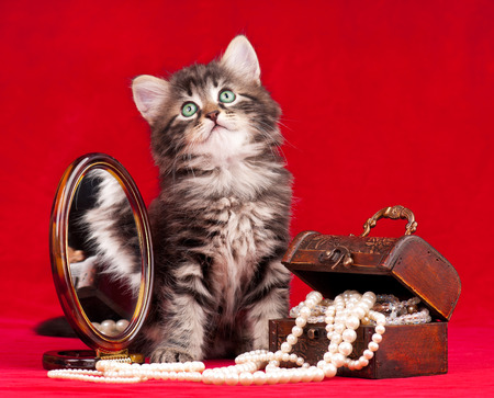 Cute kitten and a chest with pearls near the mirror over red background photo
