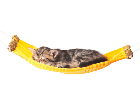Asleep kitten on a hammock made of cloth isolated on white background