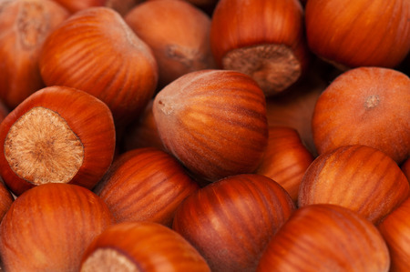Bright ripe filberts with unbroken nutshell close-up