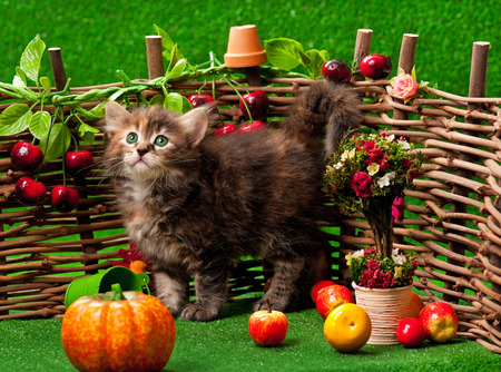 Cute kitten standing on the bright artificial grass over decorative wattle fence background photo