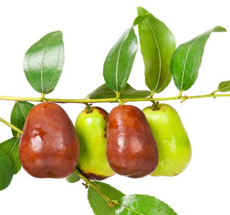 흰색 배경에 고립 된 잎 분기에 신선한 대추 과일 (Ziziphus의 zizyphus) 스톡 콘텐츠