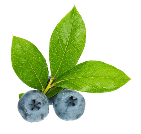 Fresh ripe blueberries with leaves on white background