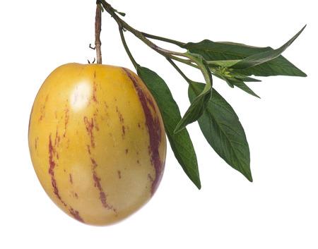 pepino: Whole single pepino fruit on a branch on white background