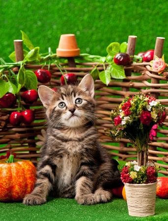 장식 새틀 펜스 배경 위에 밝은 인공 잔디에 귀여운 새끼 고양이 서