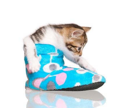 bootee: Cute little kitten in child fleece bootee isolated on white background Stock Photo