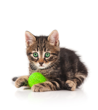 Cute little kitten plays with ball of green threads on white background Stock Photo