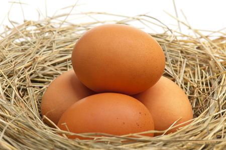potentiality: Huevos crudos en un nido de p�jaros con plumas de cerca Foto de archivo