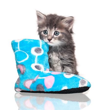 bootee: Cute little kitten on a fleece bootee over white background Stock Photo