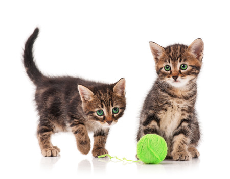 Two curious cute kittens isolated on white background cutout photo