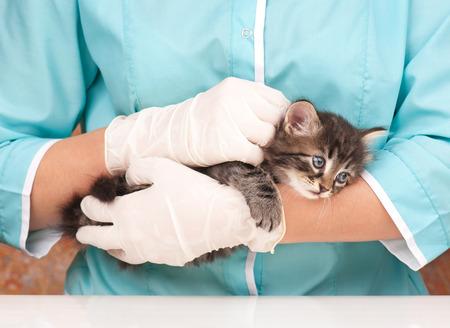 kitten: Veterinary survey of cute frightened kitten close-up Stock Photo