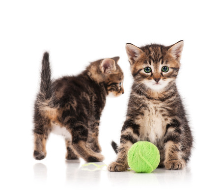 Two serious cute kittens isolated on white background. Focus on the first one photo