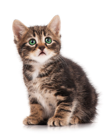self harm: Cute fluffy little kitten isolated on a white background cutout Stock Photo