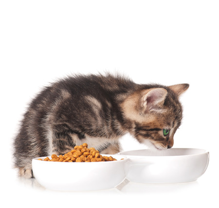 Cute kitten with bowl for a forage over white background Imagens