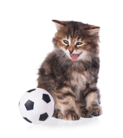Cute siberian kitten with football ball isolated over white background photo
